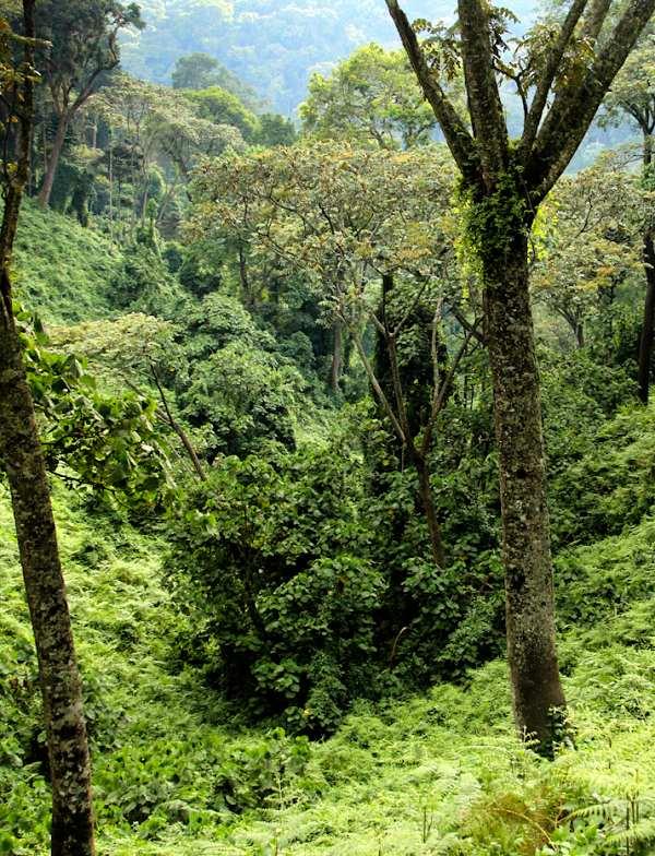 El África Tropical emite cantidades ingentes de metano