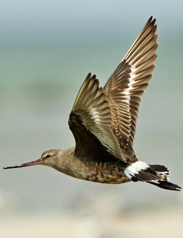 El 'secreto mejor guardado' de las aves migratorias