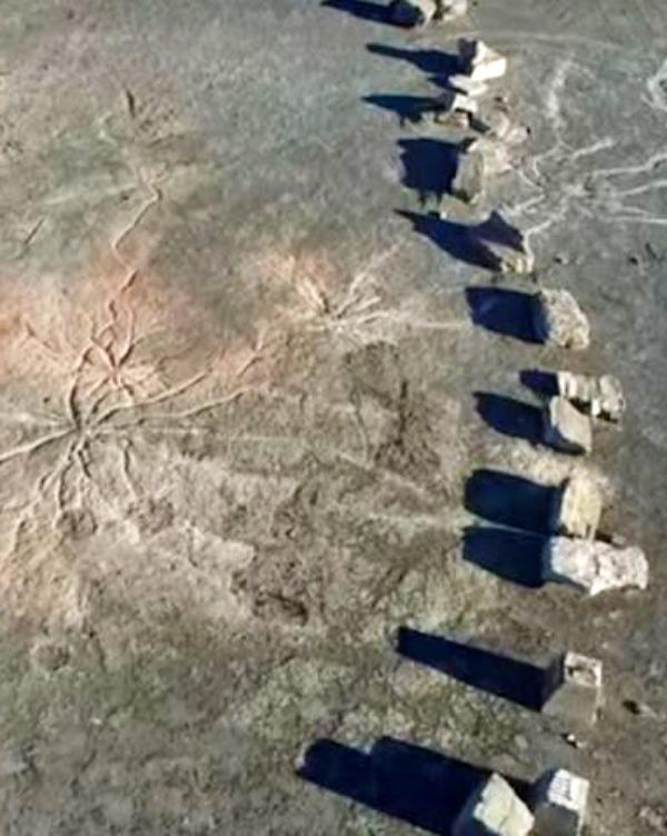 Nueva York. Aparece un bosque fósil de 386 millones de años