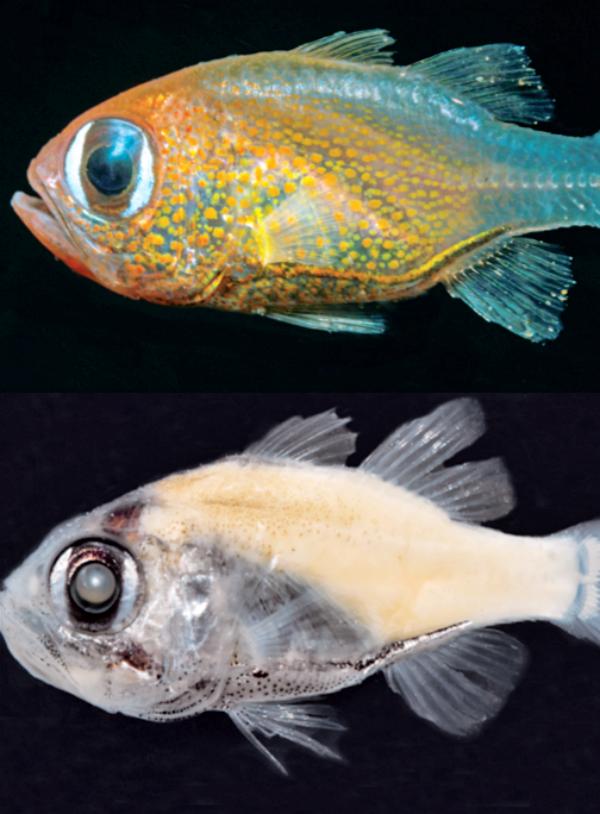 California. La Academia de Ciencias certifica el descubrimiento de 71 especies nuevas este año