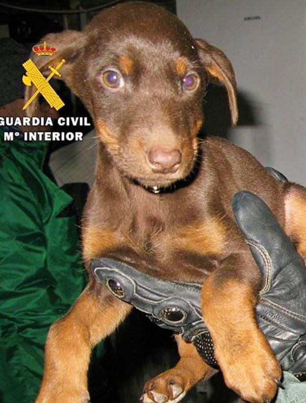 Rescatando perros de un criadero anegado en Melgar de Fernamental (Burgos)