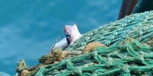 La sobrepesca continuará en 2020