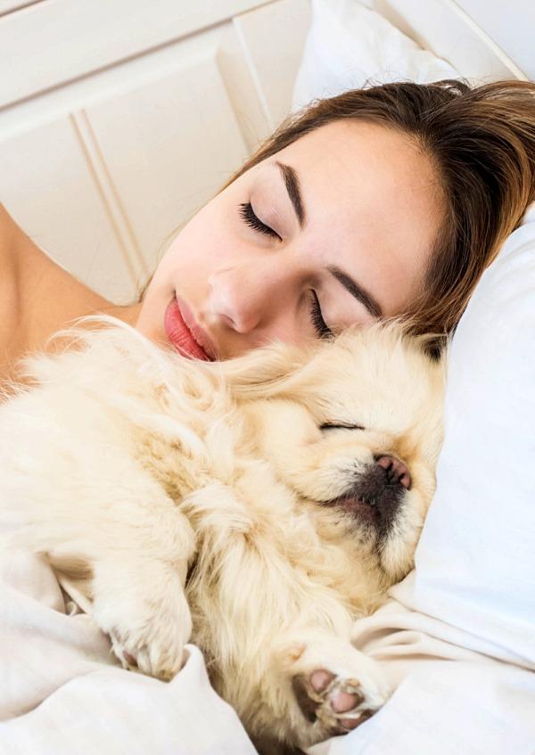 Conoce las ventajas y desventajas de dormir con tu mascota