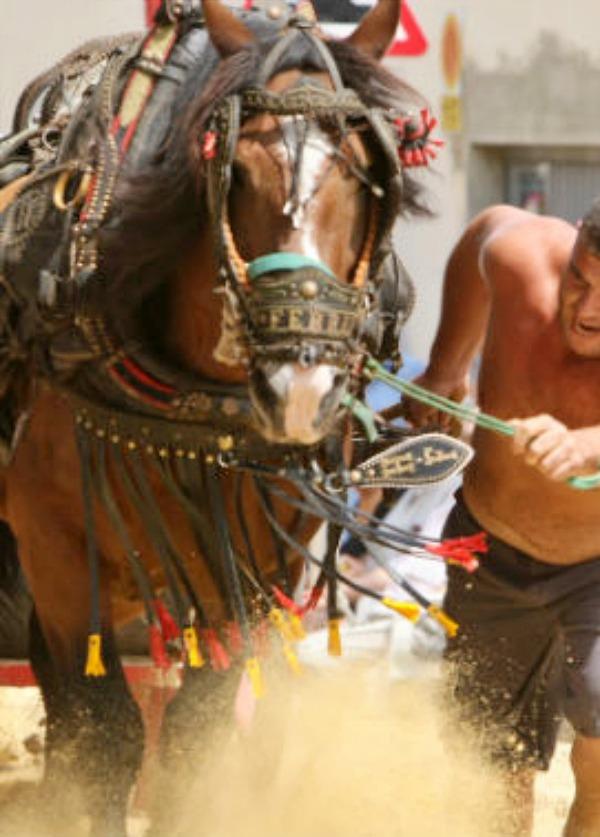 PACMA rechaza la exhibición de tiro y arrastre en Cocentaina (Alicante)