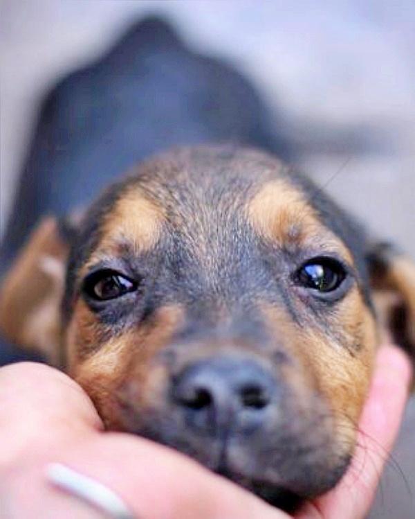 Año y medio de inhabilitación y seis meses de prisión por matar a dos perros