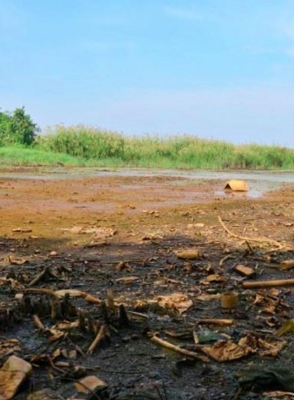 Tecnología verde, biocarbón magnético para descontaminar suelos