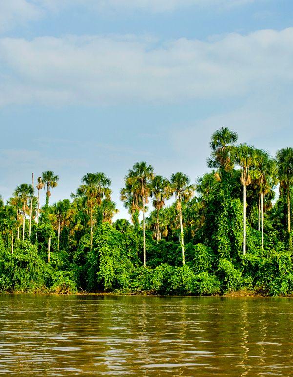 La pérdida de bosque tropical primario dispara su impacto en CO2