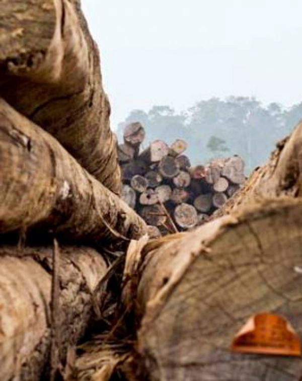 España alcanza las 5.000 licencias FLEGT validadas que garantizan la legalidad de los productos de madera importados