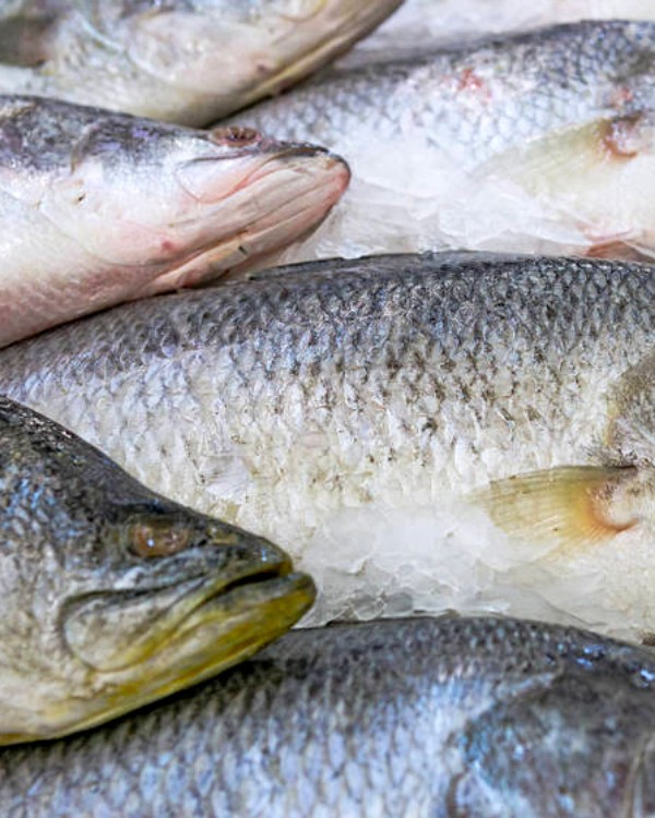 A causa del mercurio en el pescado, Sanidad recomienda limitar su consumo a 3 o 4 raciones por semana