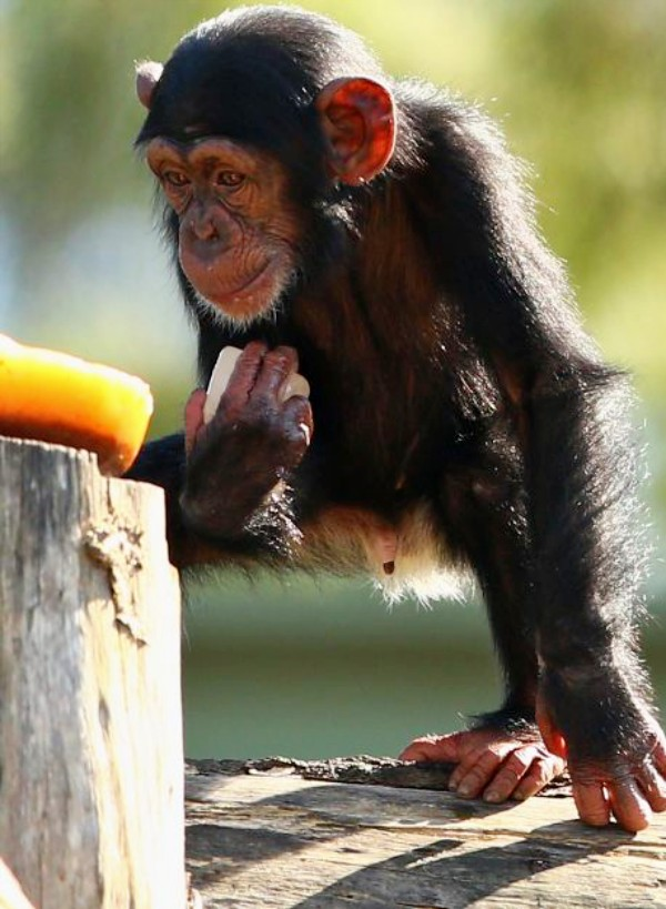 Las malas prácticas de los zoos en Andalucía
