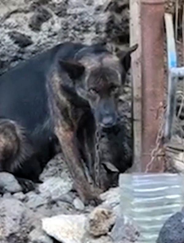 Vídeo sobre el maltrato que padecen los perros de caza en los barrancos de Canarias