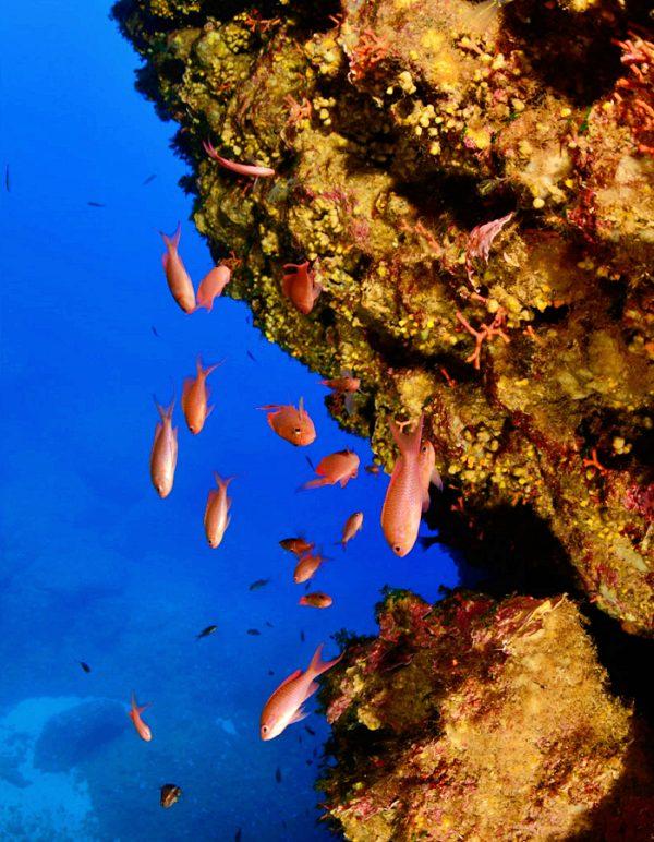 Los países mediterráneos se comprometen a combatir la pesca ilegal y preservar ecosistemas amenazados