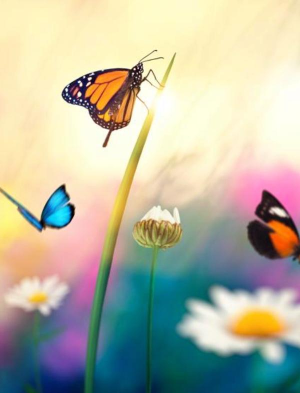 Los márgenes florales aumentan en un 130% las poblaciones de insectos en entornos agrícolas