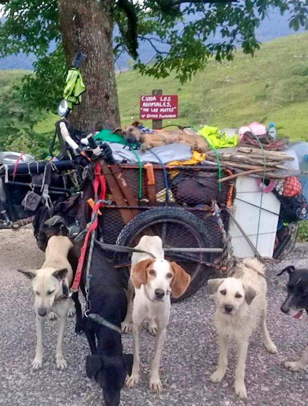 México. El hombre que recorre el país para rescatar a los perros abandonados de la calle