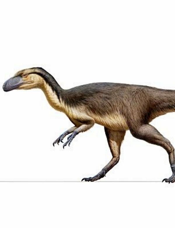 ¿Qué sabes de los dinosaurios con plumas en hábitats polares extremos?