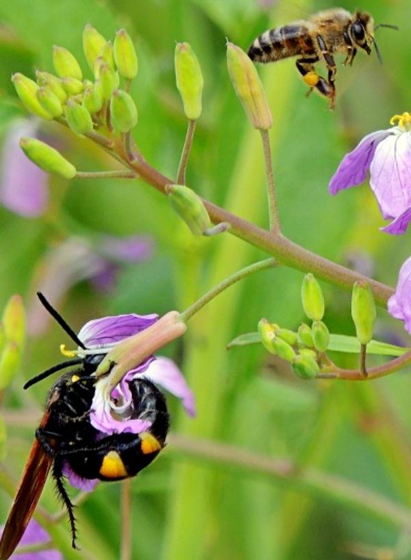 La biodiversidad es la 'gran aliada' de los campos agrícolas