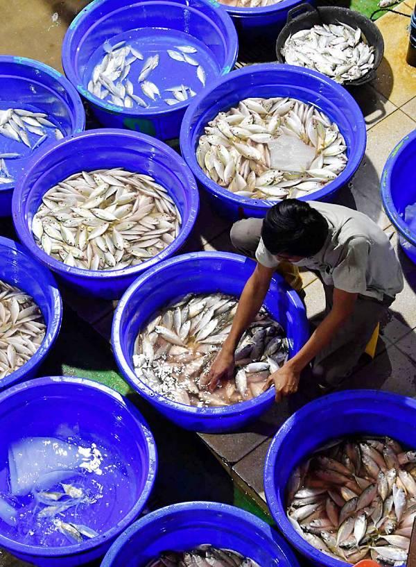Europa se arroja a los brazos de la sobrepesca