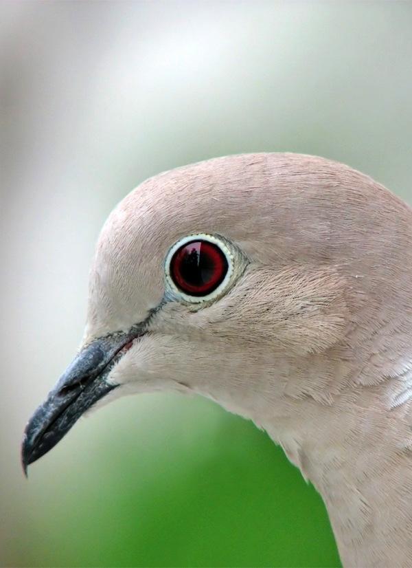 Un porcentaje muy pequeñode las especies en peligro de extinción están protegidas por las directivas europeas