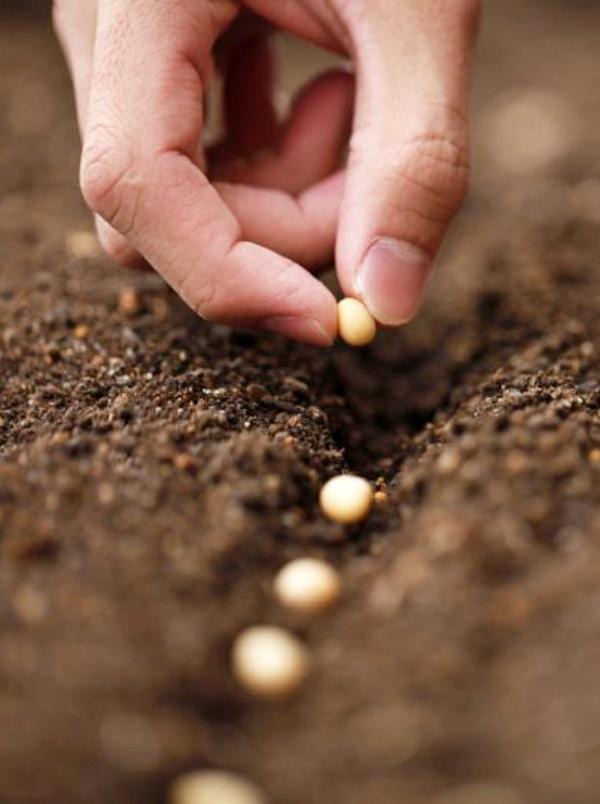 El Parlamento Europeo organiza en Granada un seminario para fomentar la producción y el consumo de productos ecológicos