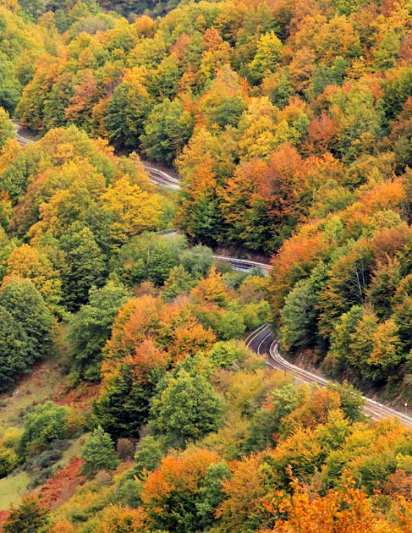 La 'increíble' retención de carbono en los bosques