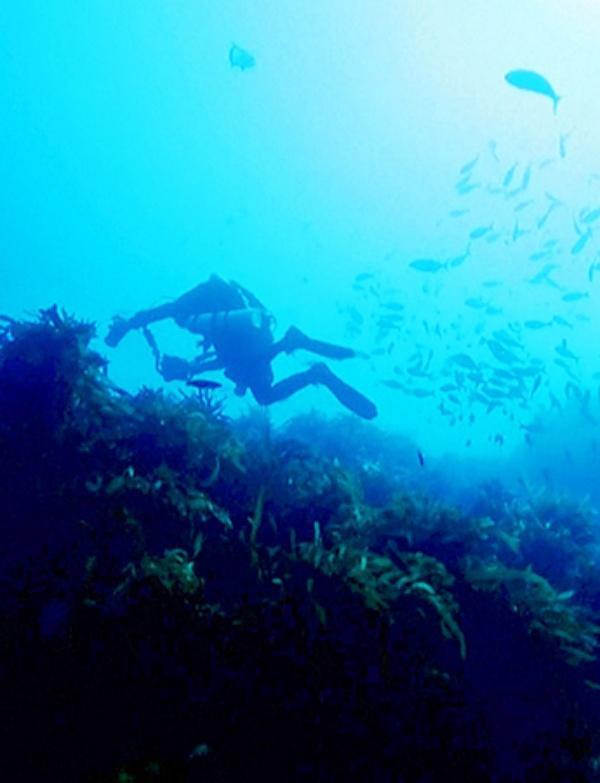 Los océanos podrían alimentar a todo el Planeta