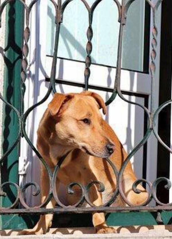 Valladolid. Exigen la creación de una 'UNIDAD DE POLICÍA MUNICIPAL PARA LA PROTECCIÓN ANIMAL'
