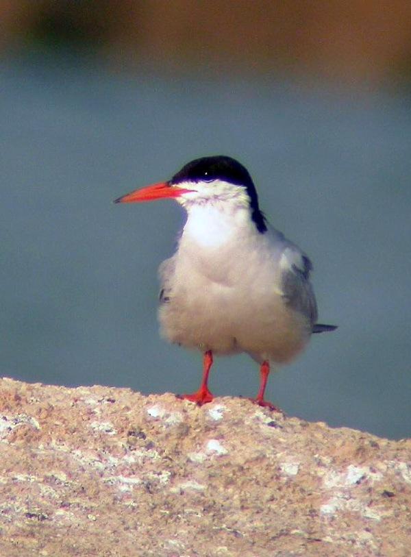 Las aves que migran a mayor distancia son las principales 'víctimas' de la crisis climática