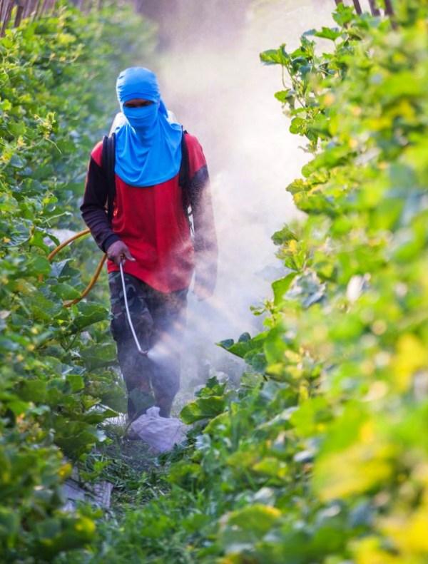 Campaña para 'finiquitar' los plaguicidas sintéticos