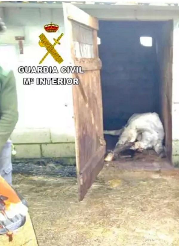 El SEPRONA halla siete caballos muertos en Melide (A Coruña)