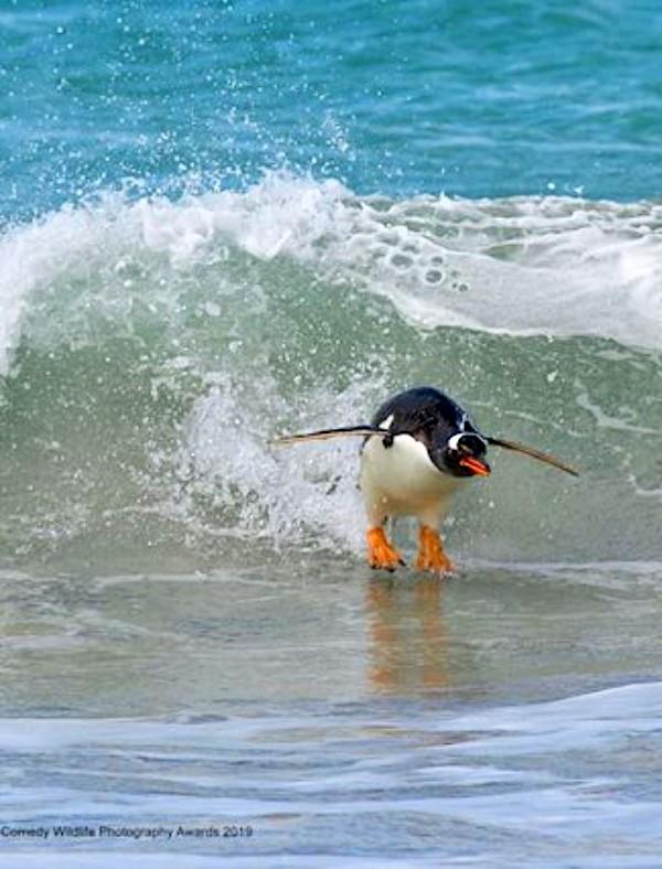 Las fotografías más divertidas de animales salvajes
