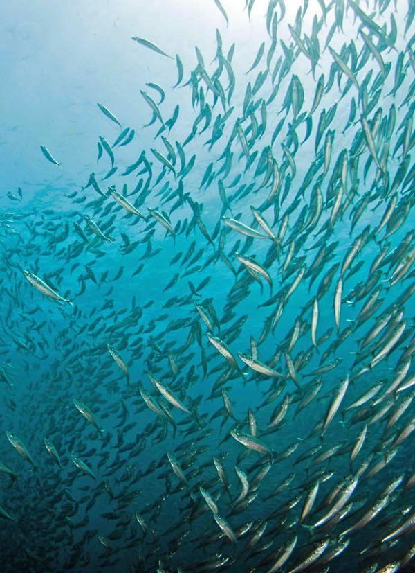 El cambio climático está causando estragos en nuestros océanos. Así es como los salvamos.