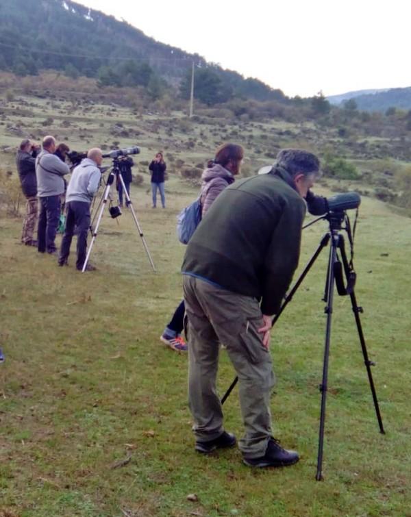 Liberan buitres negros en la Sierra de la Demanda burgalesa