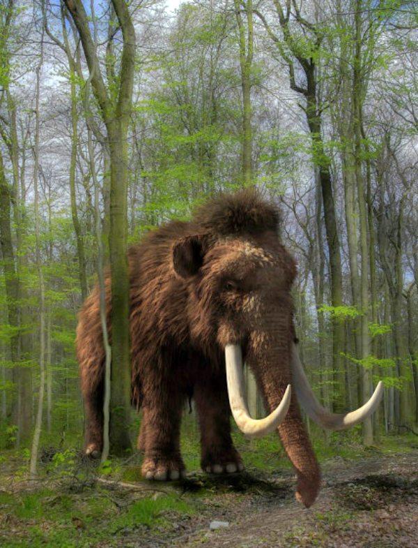 ¿Cuándo y dónde murió el último mamut sobre el Planeta Tierra?