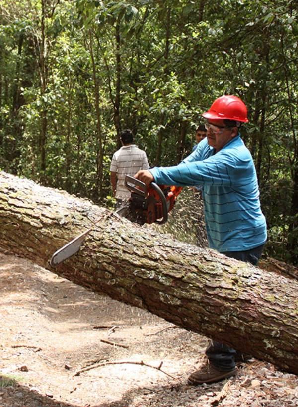 Ecólogos de reputación mundial exigen un cambio radical en el manejo forestal
