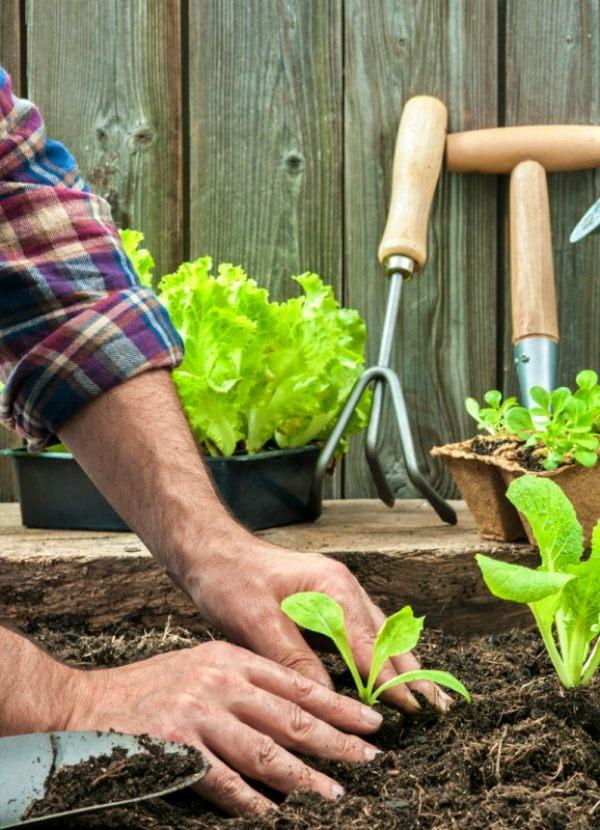La vida saludable lo es mucho más si puedes tener un huerto en casa