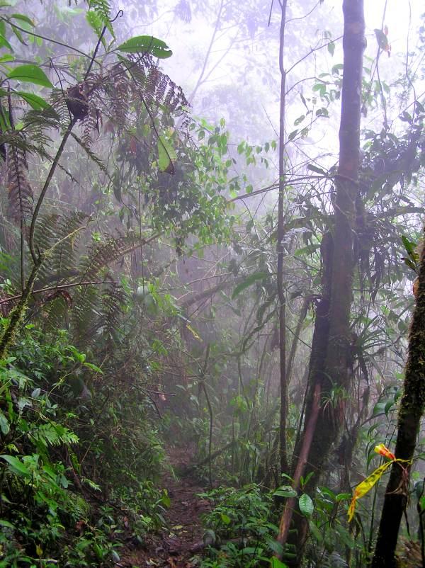 Los mayas anticiparon los efectos de la actividad humana en bosques tropicales