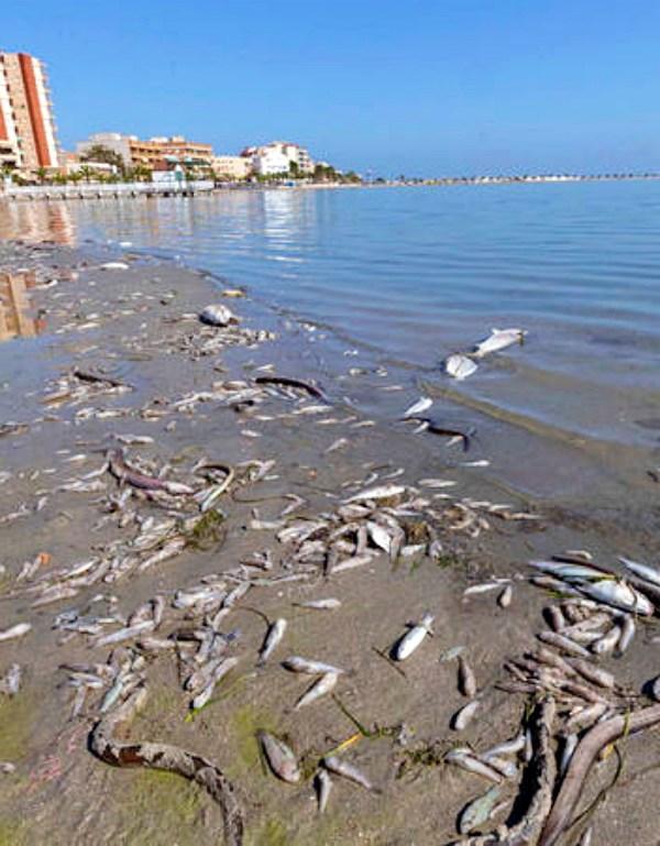 El nefasto estado del Mar Menor