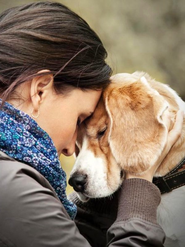 Si tienes un perro vivirás más