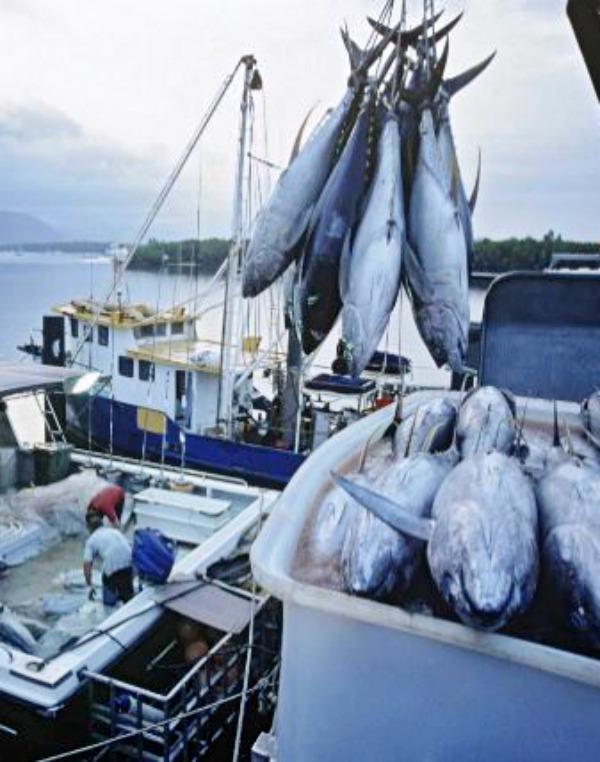 La pesca sostenible 'prostituida' por el fraude en la potencia de los motores