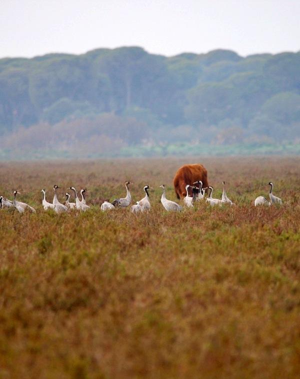 Cádiz. El PGOU de Trebujena es nulo al no haberse sometido a la preceptiva Evaluación Ambiental Estratégica