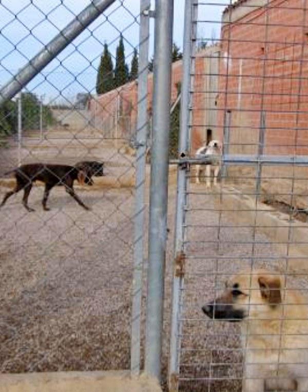 Cinco decenas perros rescatados por una protectora de Sevilla