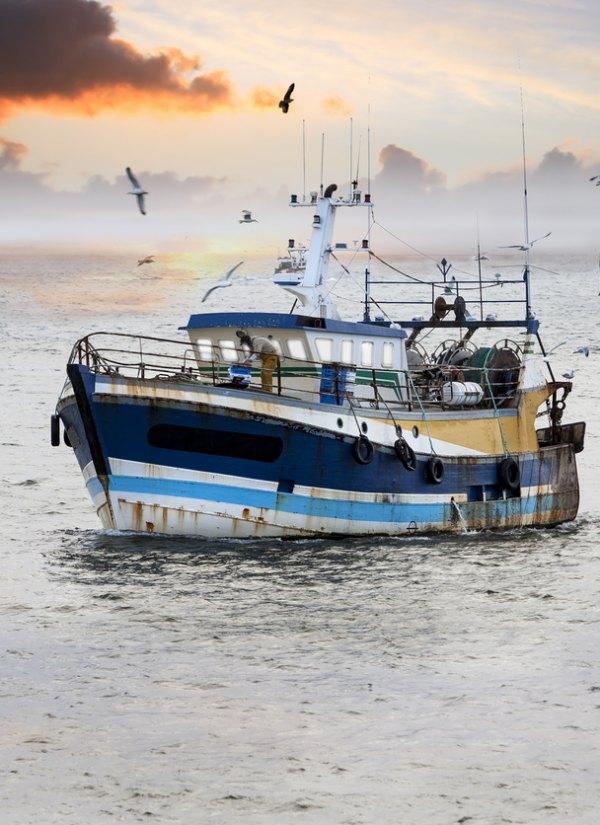 Abogados ambientales sugieren una mejora en el desembarque a España, Francia, y Dinamarca
