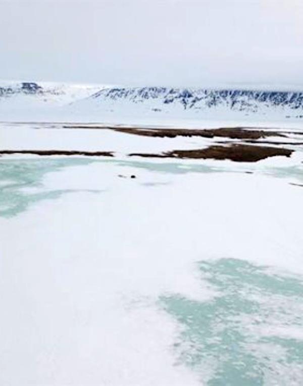 Una nevada extrema 'echó a perder' la temporada reproductiva del Ártico en 2018
