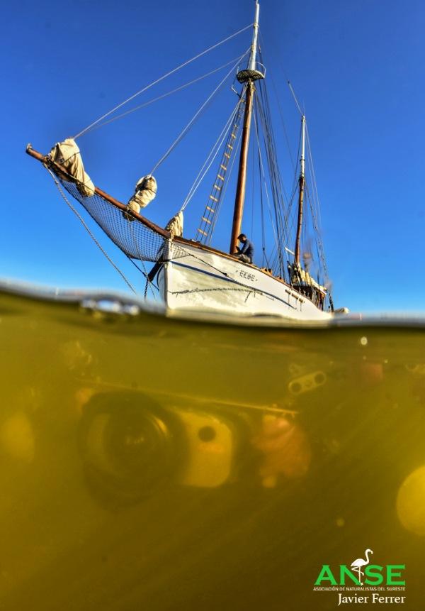 Exigen al MITECO medidas reales y convincentes para salvar el Mar Menor