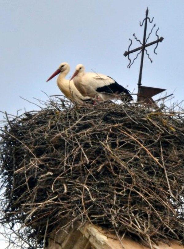 Nidos de aves repletos de basura generada por el ser humano