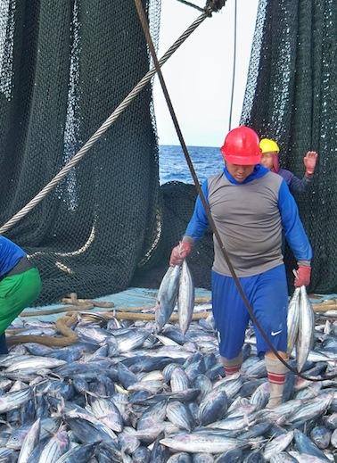 Europa 'impasible' ante la sobrepesca