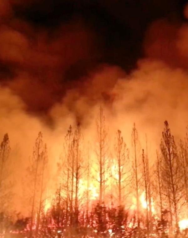 Tecnología verde en un gel para prevenir incendios forestales