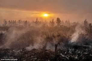 El aceite de palma y la pasta de papel detrás de los inmensos incendios de Indonesia