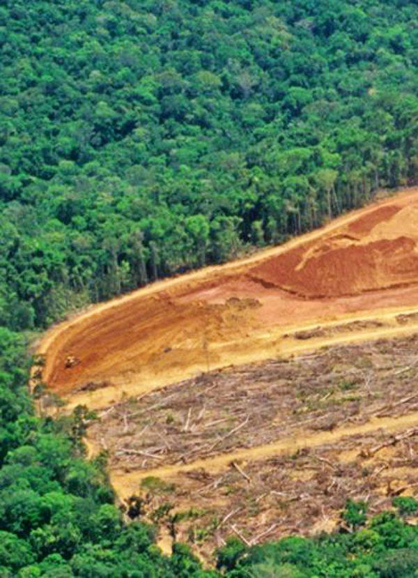 "Expertos en la Amazonía aseguran que ""para producir un solo anillo de oro se generan 20 toneladas de residuos"