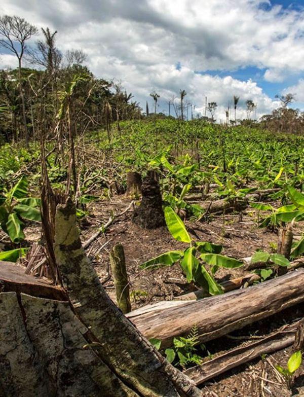 Las áreas protegidas no reducen la presión humana en hábitats tropicales